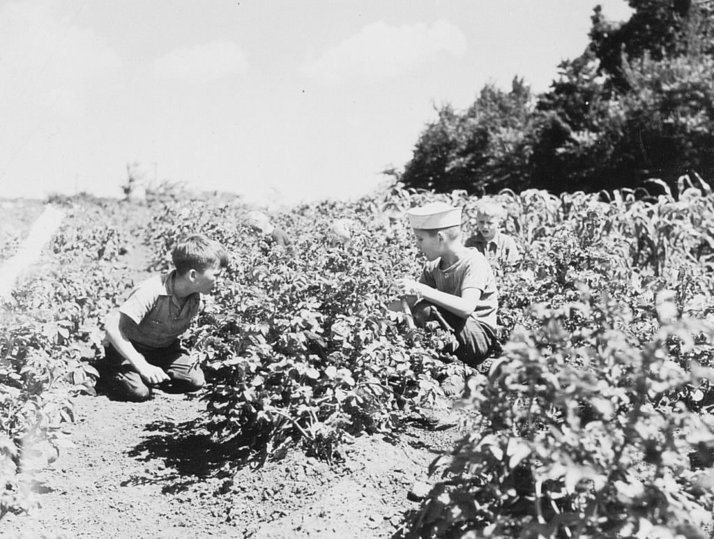 Kids farming in the Victory Garden at Camp Manakiki