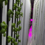 Inside hydroponic farming at North Market